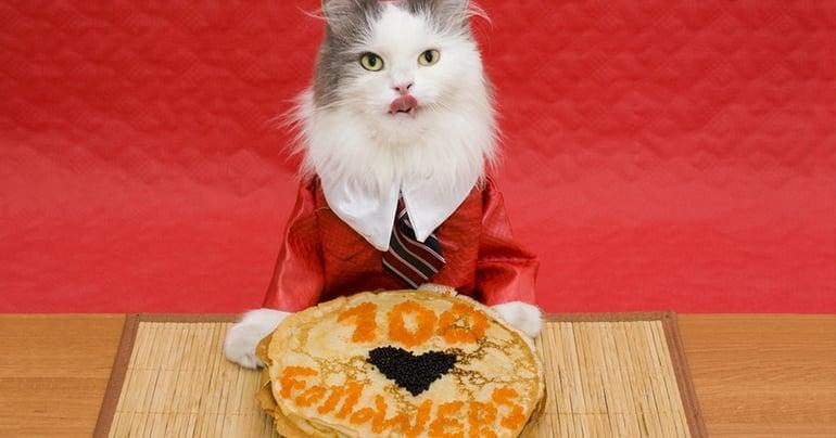 social_cat.jpg